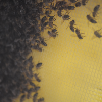 """""""Fabrica de miere"""" din Nikiti"""