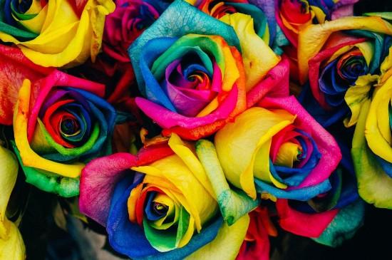 roses-828945_1920